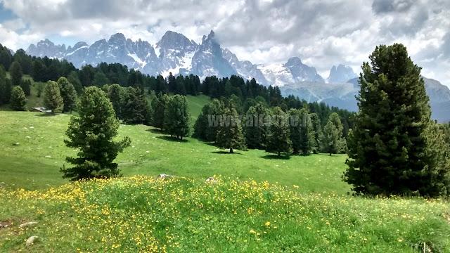 Trentino Pale di San Martino bosco