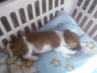 A puppy sleeping in a basket