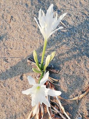 in spiaggia a Palinuro
