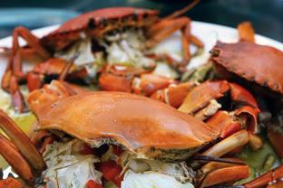 10 manfaat kepiting dan kandungan nutrisi di dalamnya