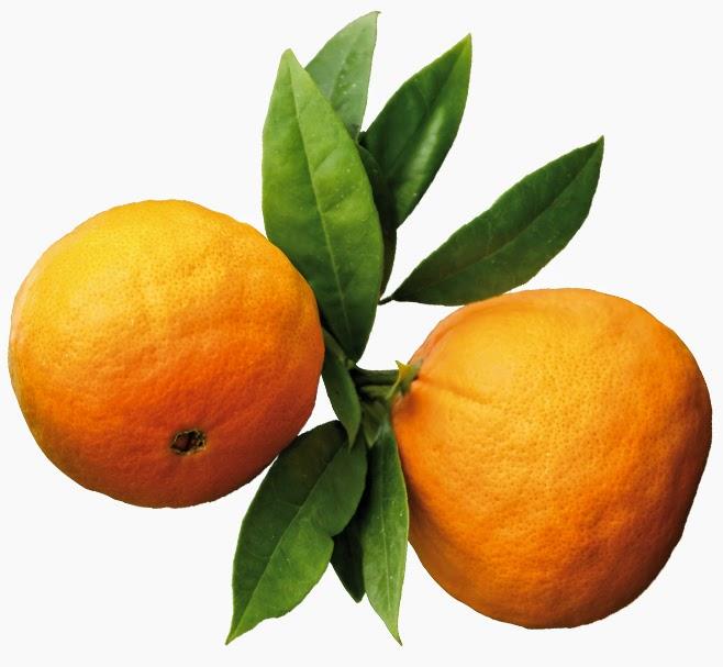 marmelade orange amere