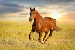 yuxuda at görmek nece yozulur, menası nedir