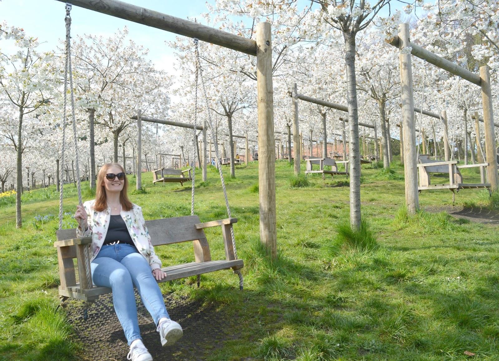 Cherry Blossom Orchard Alnwick Garden