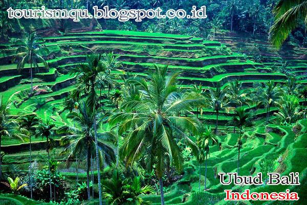 Ubud Tourist Places In Indonesia