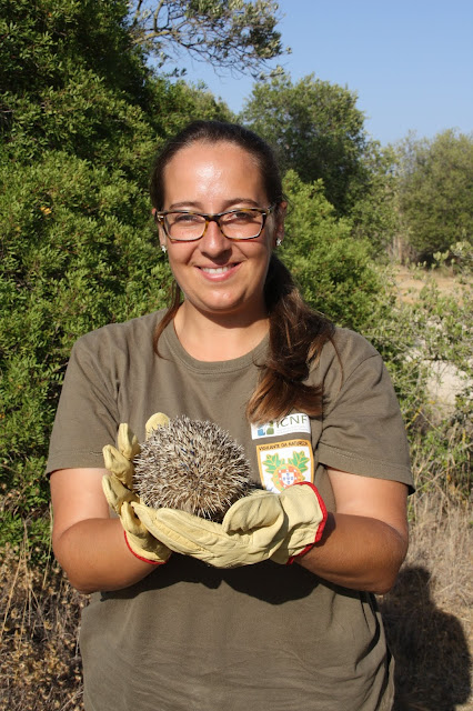 Devolução à Natureza de cinco ouriços-cacheiros