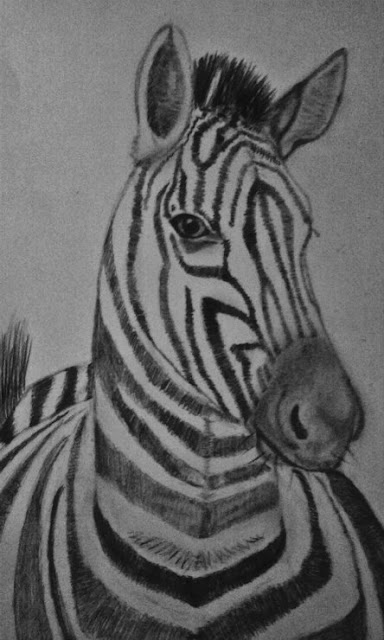 Graphite drawing, Zebra