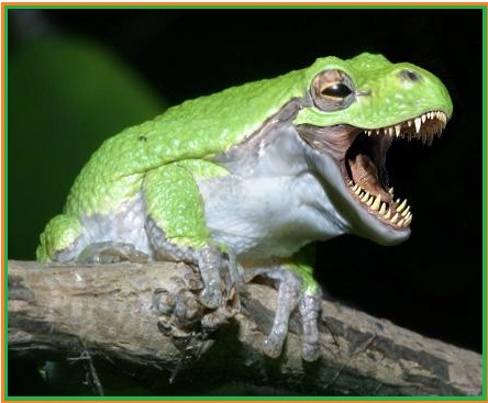 Biologi Gonzaga Klasifikasi Vertebrata