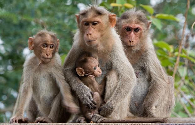 Hasil gambar untuk gambar monyet