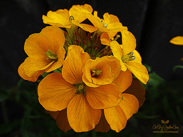 Beautiful Orange Wildflower