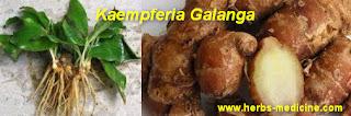 Herbalife use Kaempferia galanga