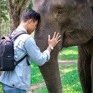 Abunawas Menaklukkan Gajah Berhadiah