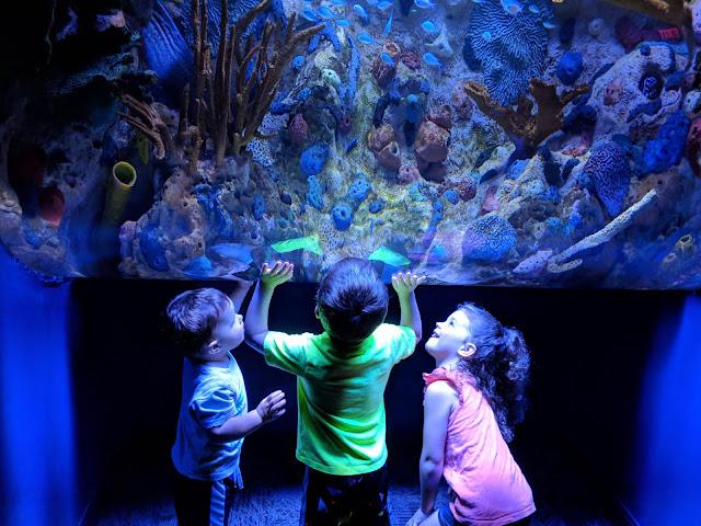 Gatlinburg, vacation, travel, family fun, to do with kids, Gatlinburg attraction, Ripley's Aquarium, Ripley's Aquarium Gatlinburg, Gatlinburg TN, Tennessee, fish, aquarium, tourist attraction, Gatlinburg with kids,
