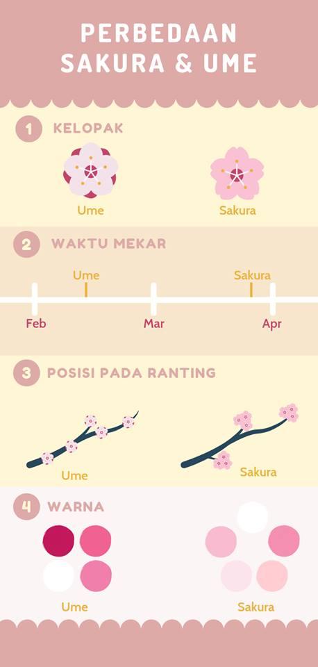 Perbedaan Waktu Indonesia Dan Jepang : perbedaan, waktu, indonesia, jepang, Perbedaan, Bunga, Sakura, CEMITI