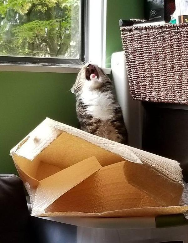Кот и сломанная коробка