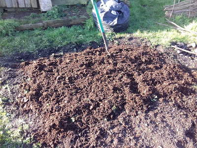 Allotment Growing - Potato Bed
