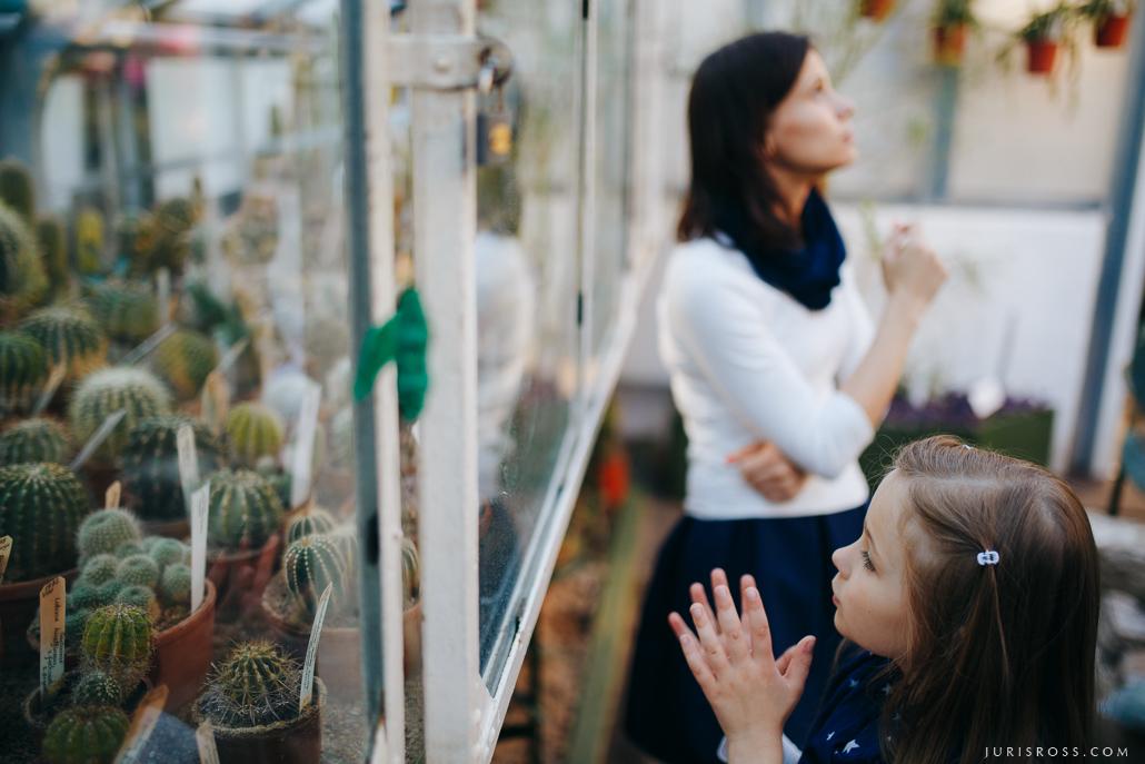 mājas kaktusu kopšana