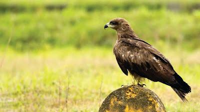 eagle-pics-stocks-image