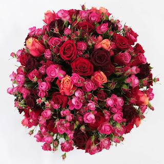 صور زهور رائعة