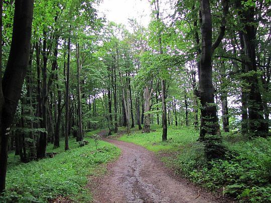 Grzbietowa dróżka przez las.