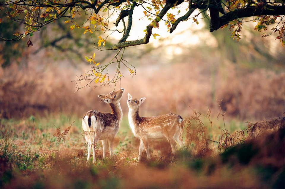 Wallpapers For You: 25 Most Beautiful Animals