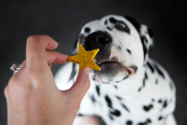 Dalmatian dog begging for star shaped homemade dog treat