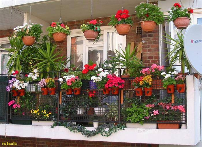 Beautiful Balcony Gardens on Interior House Design Floor Plans