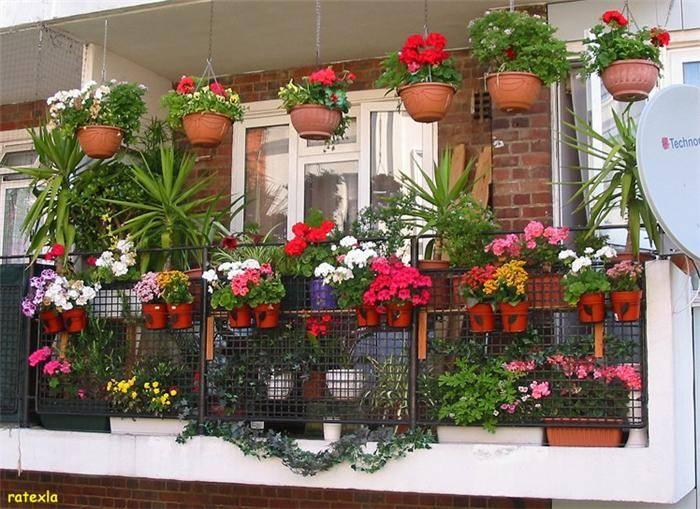 Kerala home design and floor plans: Beautiful Balcony Gardens
