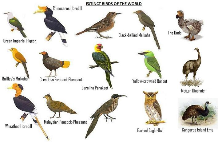 extinct animals and birds with their names