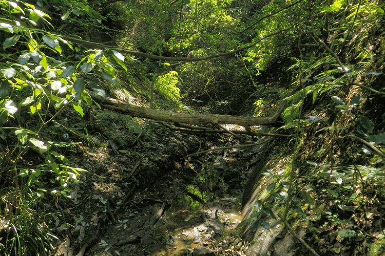 スゴログ T秘境 高宕渓谷