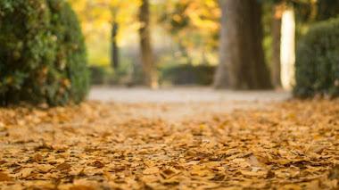 Senderos de otoño en el Real Jardín Botánico de Madrid