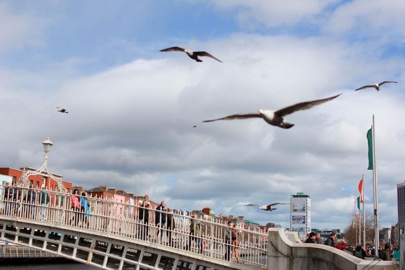 vue d'oiseaux volant au dessus de la rivière principale de Dublin