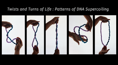 Twists and turns of life: Patterns of DNA supercoiling