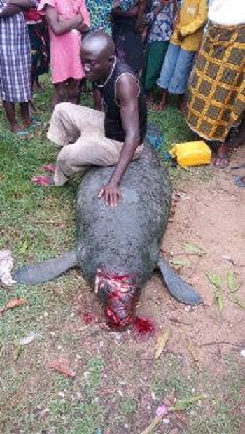 See the Massive Sea Monster that Was Captured in Rivers State Recently (Photos)