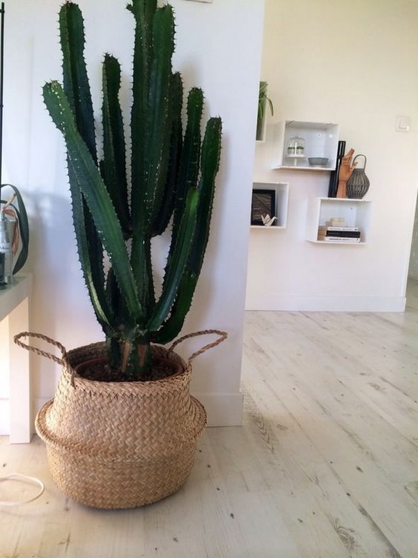 Original Ideas For Decorating Interiors With Cactus 11