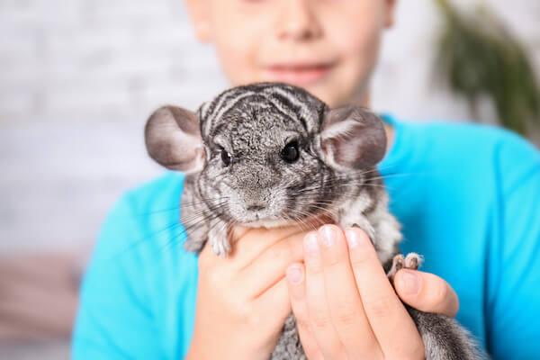 صور الحيوانات الأليفة الأكثر غرابة (Top 20)
