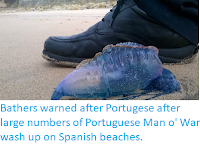 http://sciencythoughts.blogspot.co.uk/2018/03/bathers-warned-after-portugese-after.html