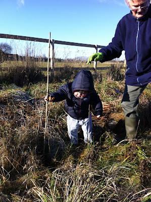 Toddler planting a small oak tree, toddle is taller than the tree in this photo