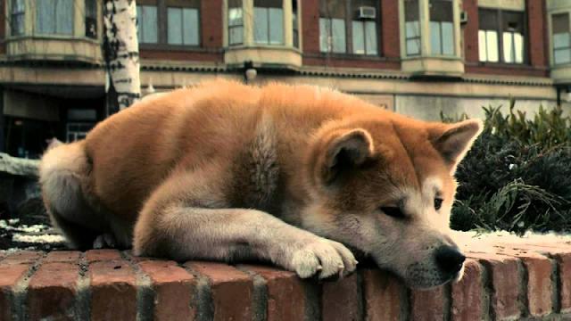 Χάτσικο, θα 'σαι για πάντα ο λόγος να θέλουμε σκύλο