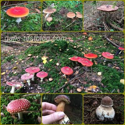 Viele Pilze