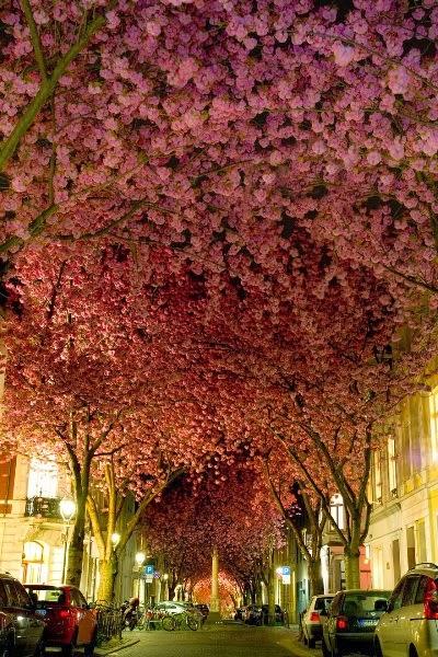 Utca Bonnban, Németországban