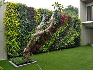 vertical garden dengan kamboja fosil