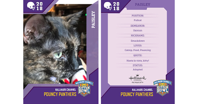 Real Cat Paisley #KittenBowl 2018