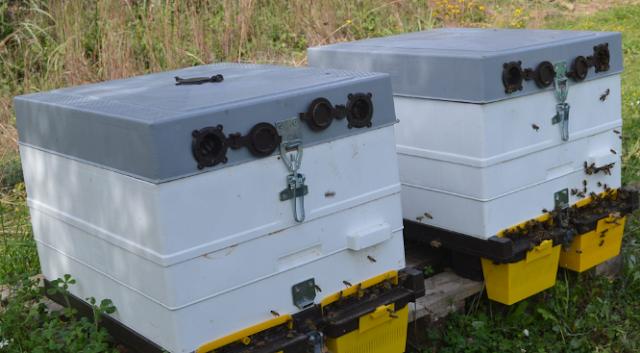 Δυνάμωμα μελισσιών κατευθείαν με πλυθησμό. Κόλπα του φθινοπώρου!