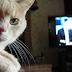 """Lei do """"Gatonet"""" pode levar para prisão quem possui TV por assinatura"""