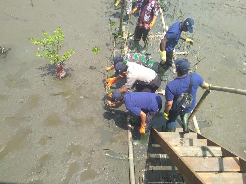 Peduli Lingkungan, Danramil Bersama HCML Tanam Pohon Mangrove