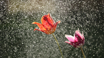 हा पाऊस - मराठी कविता | Ha Paaus - Marathi Kavita