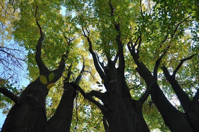 A PTE Botanikus Kertje október 31-én, hétfőn, tehát a munkaszüneti napon is szeretettel várja 10 - 16 óráig azokat a látogatókat, akik szeretnék megtekinteni a kert és az üvegház gazdag növényvilágát. A parkban gyönyörűn színeződő lombos növények, ősszel virágzó évelők, különleges termések láthatók. Az üvegházakban pedig érnek már a citrus-félék, terem a kakaófa, a kávé, guava, sok a virágos növény: broméliák, orchideák, rovaremésztők, trópusi és mediterrán dísznövények