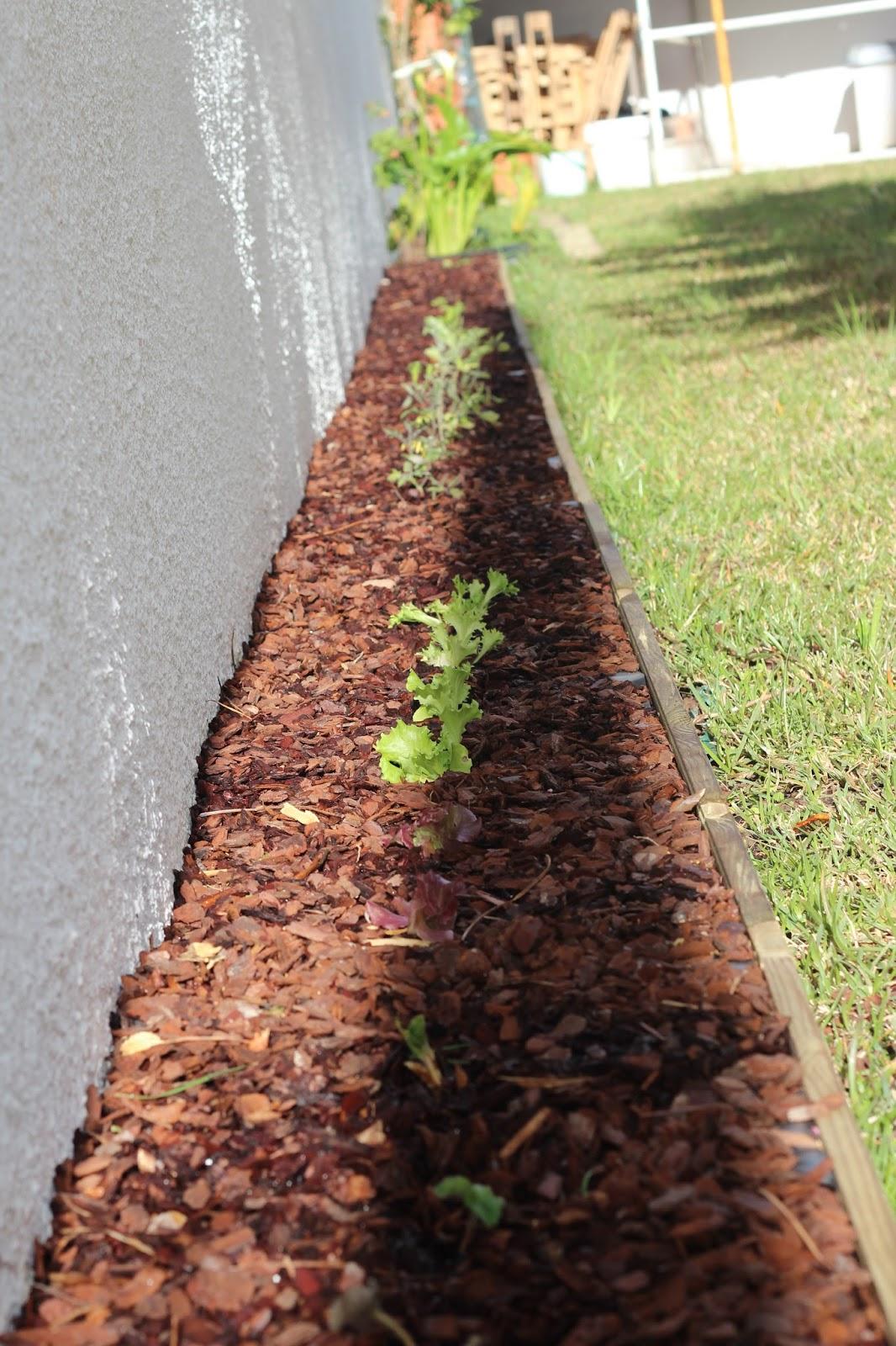 A economia c? de casa: O Jardim e a Mini-Horta