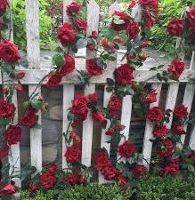 Bunga mawar yang indah