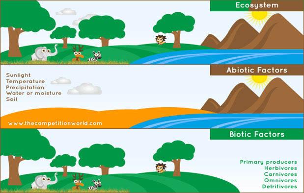 yaitu komponen biotik dan komponen abiotik Komponen Biotik dan Abiotik, Pengertian, dan Contohnya